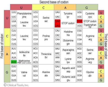 codon_table