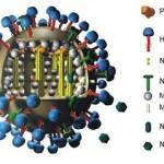 Creado en laboratorio un virus mortal (en ratones) híbrido de gripe aviar H5N1 y humana
