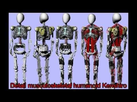 Kenshiro: el robot humanoide con más músculos jamás construido (vídeo)