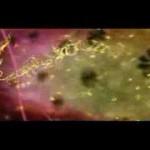 Vídeo del dogma central de la biología molecular, comentado en español