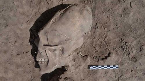 Cráneo humano encontrado en una excavación en Sonora (México)
